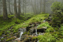 creek in wild wet Carpathian forest von pasha66