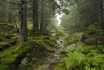 track in wilde forest in Carpathians von pasha66