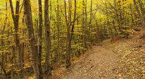 pathway on a hill in autumn forest von pasha66