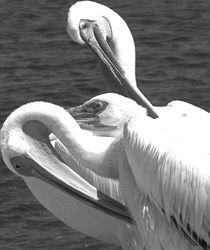 pelican von james smit