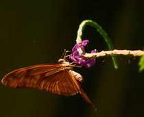 butterflys by james smit