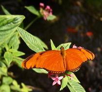 brightly coloured wings von james smit