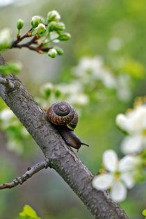 snail the traveller von Ekaterina Samorukova