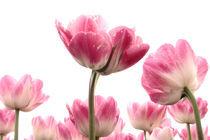 rosa und grün am Himmel by Annette Sturm