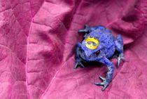 Der Froschkönig von tinadefortunata