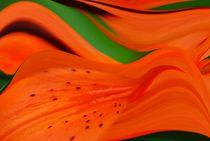 das Blütenblatt by tinadefortunata
