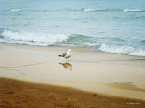 Bird on the Beach von Milena Ilieva