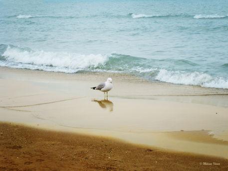 Bird-on-the-beach