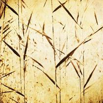 reeds in the wind by Priska  Wettstein