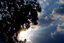 die Sonne kommt by tinadefortunata