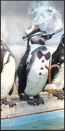 Penguin by Cooper Stephen