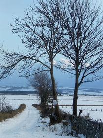 Snow Road von Peter Valente