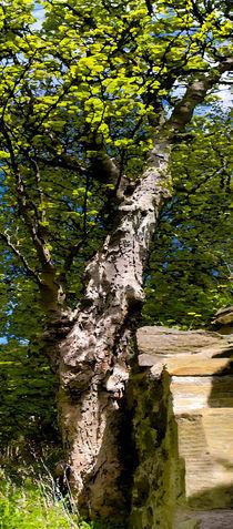 Tall Tree von Peter Valente
