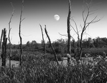 Moon, I'm Swamped... by Ric LaFollette