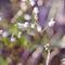 Biale-kwiatkiprint