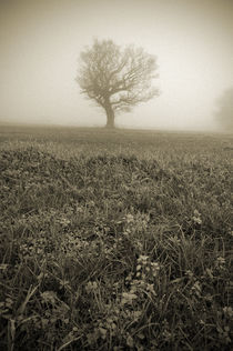 Tree in Winter Fog by Craig Joiner