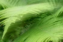 Phantasie in grün von Walter J. Pilsak