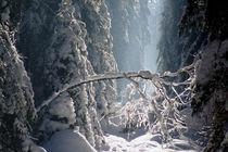 Winterwald von Walter J. Pilsak