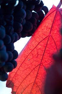 Rotwein mit Herbstlaub by Werner Schulteis