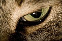 Auge des Tigers by Werner Schulteis