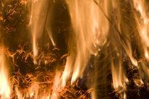 Fire Devil I  Feuerteufel I von Werner Schulteis