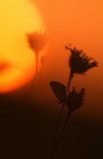 Sonnenuntergang IV - sunset Iv von Werner Schulteis