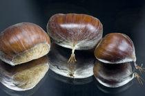 Edelkastanie - Sweet Chestnut by Werner Schulteis