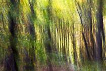 Wald - forest abstrakt by Werner Schulteis