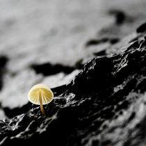Still life von Amirali Sadeghi