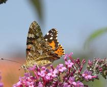 Schmetterling by Jutta Schaaf