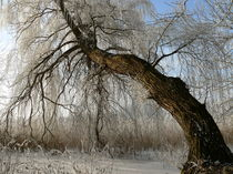 'schiefer Baum' by Diana Krenz