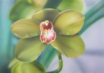 Orchidee von Kristin König-Salbreiter