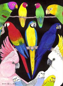 Papagei Köpfe by Carolyn McFann