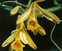 Vanilleblüten von Dietrich Moravec