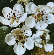 Birnbaumblüten von Dietrich Moravec