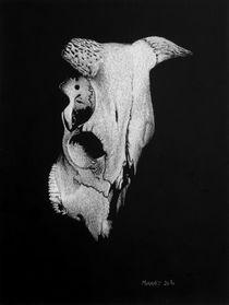 Stierschädel von Dietrich Moravec