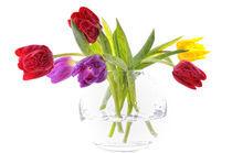 Tulpen von Carmen Steiner