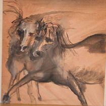 horses von matthias zeidler
