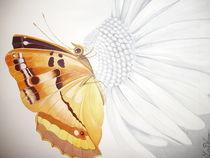 Schmetterling von Lena Wanner
