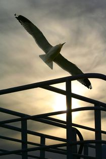 Vogelflug by Maren Beßler
