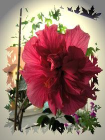 Hibiskusblüte von Ingrid Steinhilber Stöckl