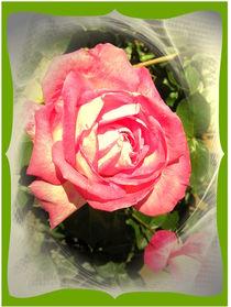 My Rose by Ingrid Steinhilber Stöckl