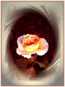 Dream of Rose by Ingrid Steinhilber Stöckl