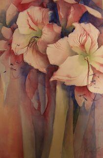 Amaryllis Weiß von Stefanie Ihlefeldt