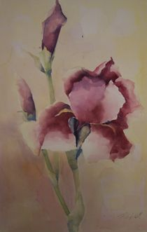 Iris von Stefanie Ihlefeldt