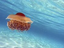 Jellyfish by Silke Heyer Photographie