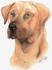 Hundeportrait von Tanja Herre