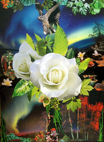 Rose by Night von Yvonne Pfeifer
