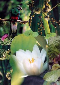 WELLNESS von Yvonne Pfeifer