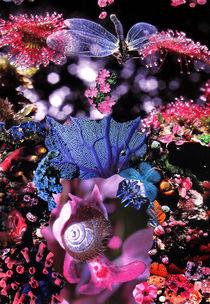 Rausch der Farben von Yvonne Pfeifer
